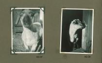 Hjalmars fotografialbum nr 2 sid 19 (22)