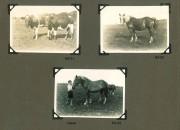Hjalmars fotografialbum nr 3 sid 12 (28)
