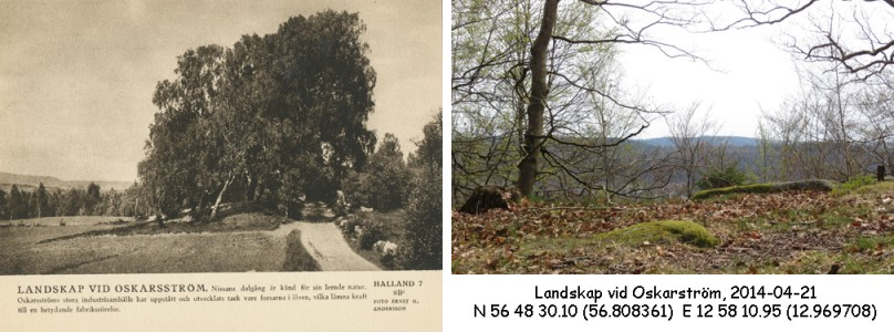 STF vykort nr 7 -Landskap vid Oskarström