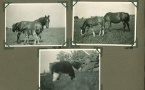 Hjalmars fotografialbum nr 2 sid 15 (22)