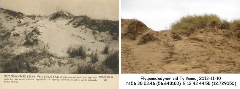 STF vykort nr 14 -Flygsandsdyner vid Tylösand